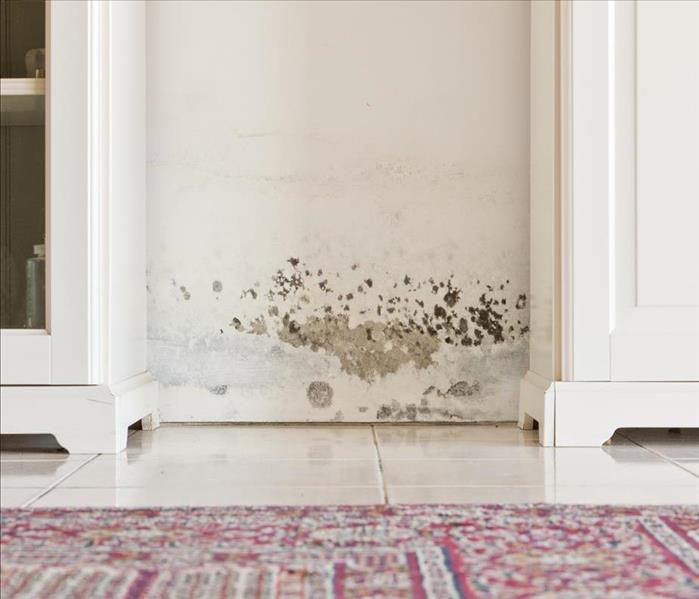 Mold Remediation Why We Advise Professional Mold Remediation for Oxnard Residents