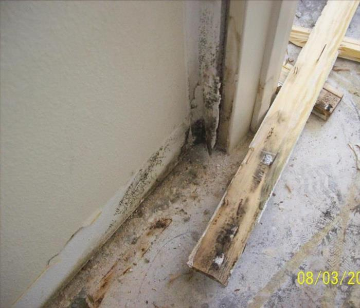 Mold Remediation 10 Mold Prevention Tips for Your Home